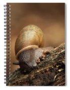 Small Wonder Spiral Notebook
