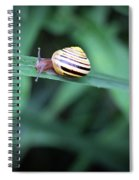 Snail In His Green Jungle Spiral Notebook