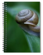 Snail In The Morning Spiral Notebook