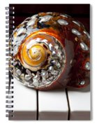 Snail Shell On Keys Spiral Notebook