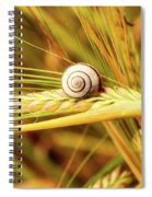 Snails On Wheat Spiral Notebook