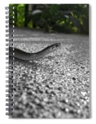 Snake In The Sun Spiral Notebook