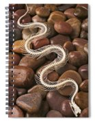 Snake Skeleton  Spiral Notebook
