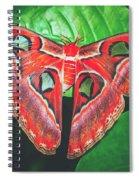 Snakehead Moth Spiral Notebook