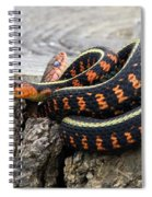 Snakes On A Stump Spiral Notebook