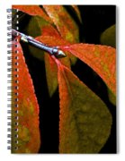 Snippet Of Fall Spiral Notebook