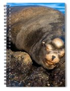 Snoozing Spiral Notebook