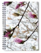 Snow Capped Magnolia Tree Blossoms 2 Spiral Notebook