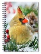 Snow Cardinal Spiral Notebook