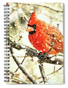 Snow Cardinal Spiral Notebook