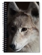 Snow Coyote Spiral Notebook