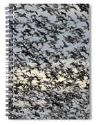 Snow Geese Spring Migration Spiral Notebook