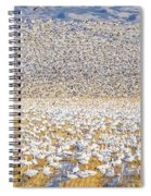 Snow Geese Take Off 1 Spiral Notebook