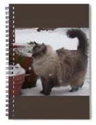 Snow Kitty Spiral Notebook
