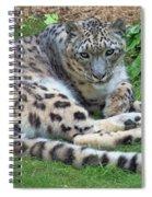 Snow Leopard, Doue-la-fontaine Zoo, Loire, France Spiral Notebook