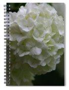 Snowball Bush Spiral Notebook