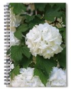 Snowball Tree With Delicate Leaves Spiral Notebook