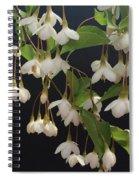 Snowbell Tree Spiral Notebook