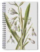 Snowdrop And Snowflake Spiral Notebook