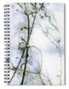 Snowstalks Spiral Notebook