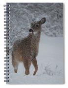 Snowy Doe Spiral Notebook