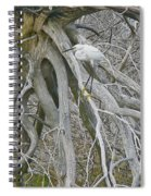 Snowy Egret - Egretta Thula - On Marsh Tangle Spiral Notebook
