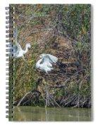 Snowy Egret Confrontation 8664-022018-1 Spiral Notebook