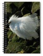 Snowy Egret Fluffy Spiral Notebook