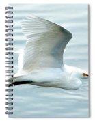 Snowy Egret In Flight Spiral Notebook