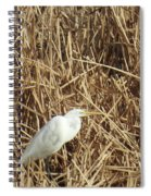 Snowy Egret In Tall Grasses Spiral Notebook