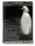 Snowy Egret Looking For Next Meal Spiral Notebook