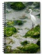 Snowy Egret On Mossy Rocks Spiral Notebook