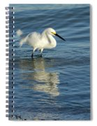 Snowy Egret On The Hunt II Spiral Notebook