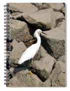Snowy Egret On The Rocks Spiral Notebook