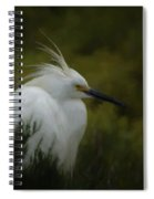 Snowy Egret Portrait Da Spiral Notebook