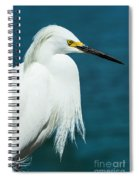 Snowy Egret Portrait Spiral Notebook