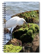 Snowy Egret  Series 2  1 Of 3  The Catch Spiral Notebook