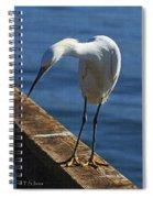 Snowy Egret That Minnow Will Be Fine Spiral Notebook
