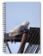 Snowy Owl 2959 Spiral Notebook