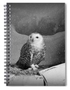 Snowy Owl Spiral Notebook