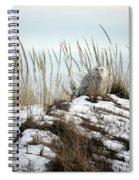 Snowy Owl In Dunes #2 Spiral Notebook