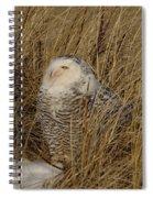 Snowy Owl In Grass Spiral Notebook