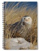 Snowy Owls On The Beach Spiral Notebook