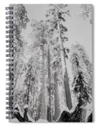 Snowy Sequoias At Calaveras Big Tree State Park Black And White 3 Spiral Notebook