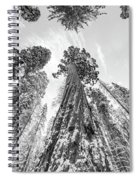 Snowy Sequoias At Calaveras Big Tree State Park Black And White 6 Spiral Notebook