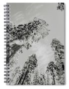 Snowy Sequoias At Calaveras Big Tree State Park Black And White 7 Spiral Notebook