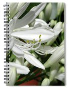 Snowy White Beauty. 7 Spiral Notebook