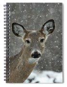 Snowy Winter Deer Spiral Notebook