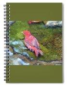 Soaking Summer Tanager Spiral Notebook
