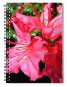 Shine On Azalea Spiral Notebook